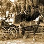 horse_photo2